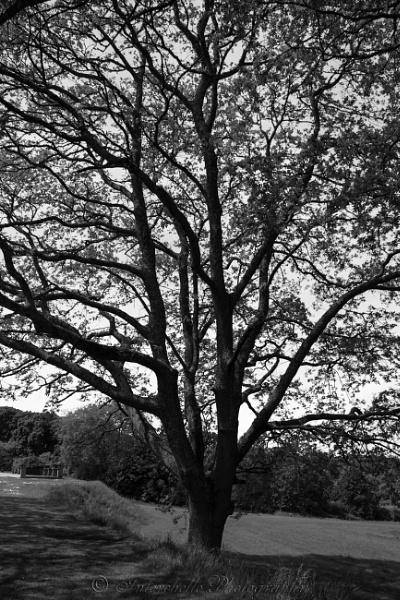 The Spead by interchelleamateurphotography