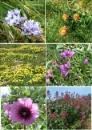 Coastal Blooms by JuBarney