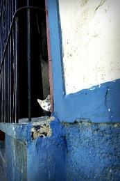 Photo : Cuban kitten