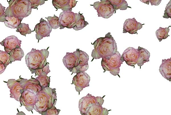 rose patterns by binder1