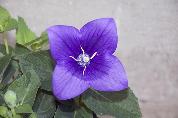 spring flower by binder1