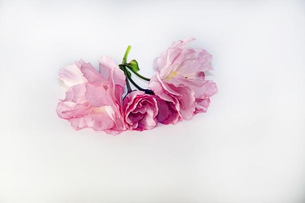 Untitled by binder1