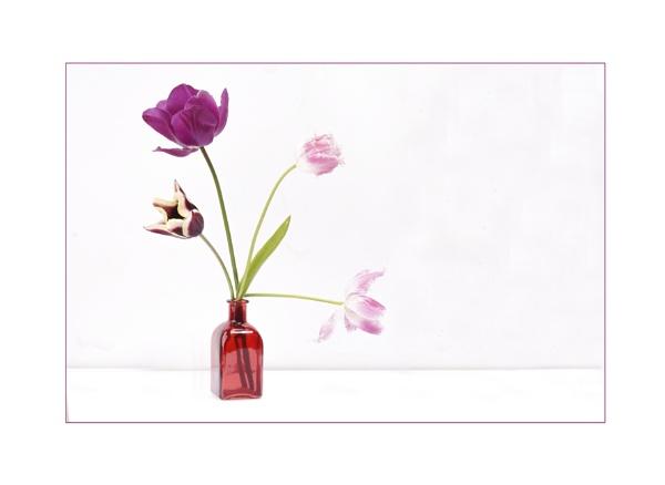Last of my tulips by deavilin