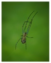 A Tiny Spider by taggart