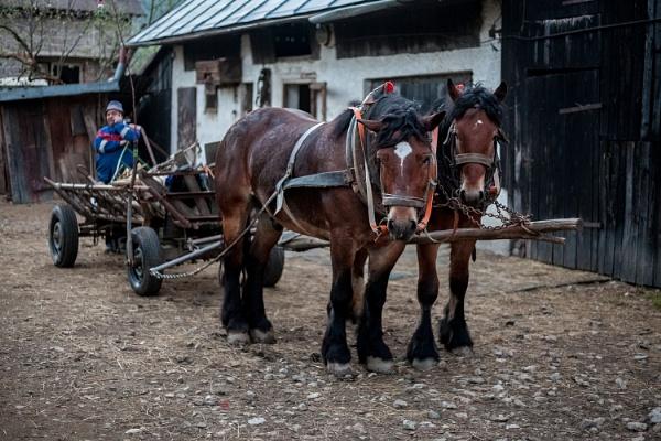 Horses by marek100