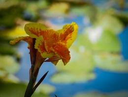 Lakeside Bloom