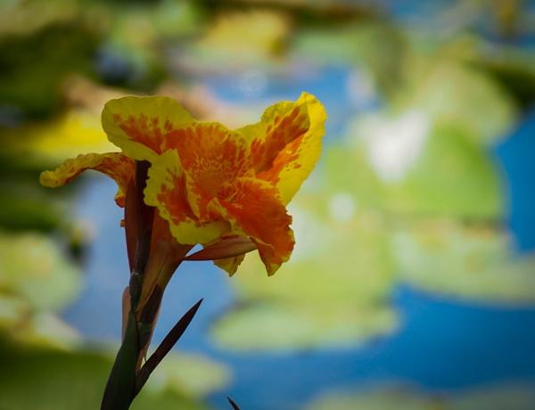 Lakeside Bloom by DaveRyder