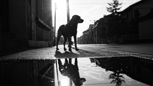 Urban Scene CXXXVIII by MileJanjic