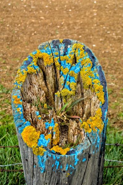 fence post by mogobiker