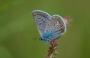 Butterfly xy by Nino812