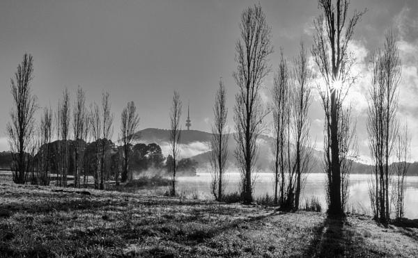 Old Poplars, Lake Burley Griffin by BobinAus