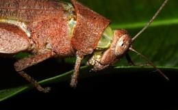 Bug's feast