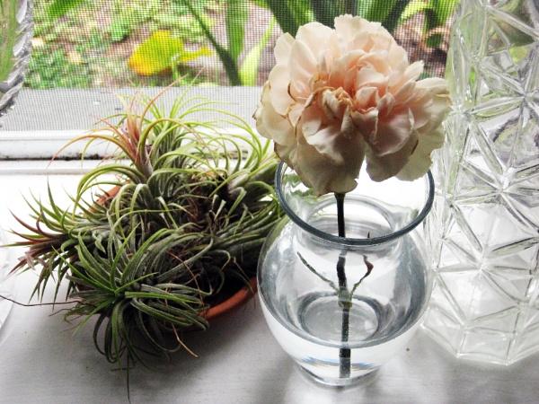 flower in window by Nesto