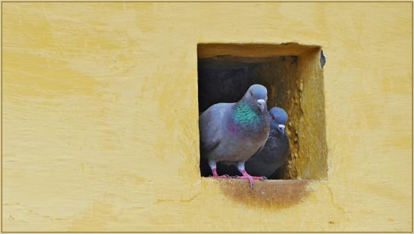 *** Pigeonhole *** by Spkr51