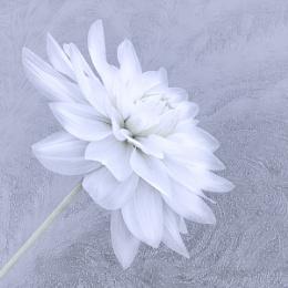 Frosty Flower II