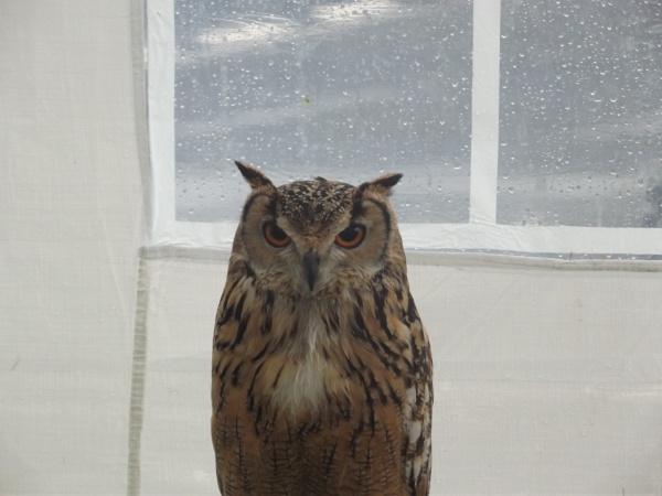 Owl by kearasmith