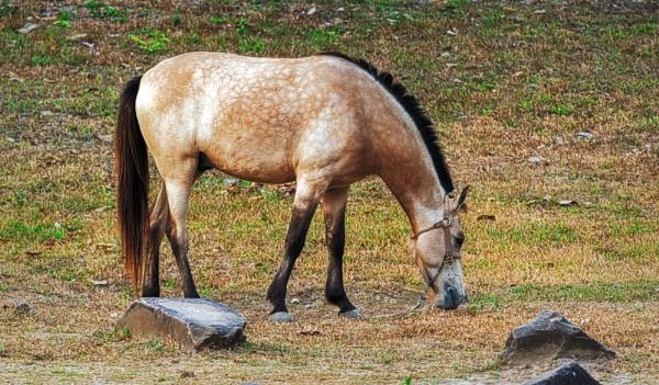 Horse by radex