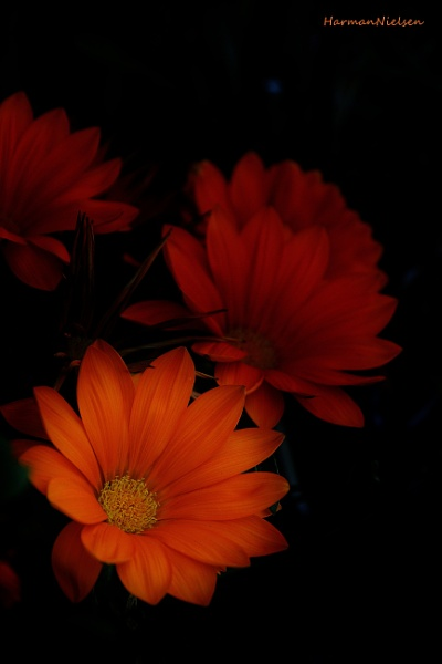 Orange&black by HarmanNielsen