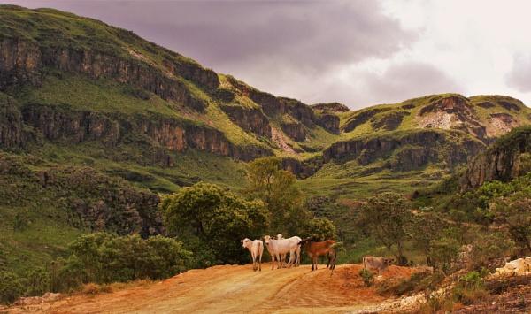 El-Cow-Dorado by PentaxBro