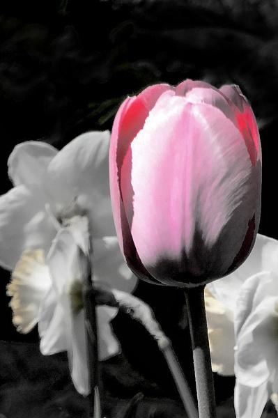 I Blush by Joline