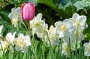 Spring Chorus by Joline