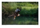 Red Kite Fishing by running_man