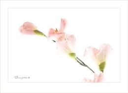 Fleurs peintes ©