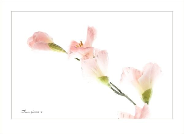 Fleurs peintes © by jonirock