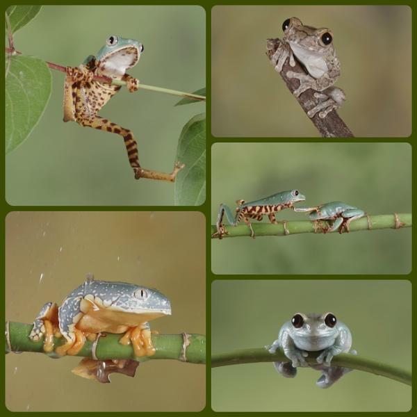 An Assortment of Frogs