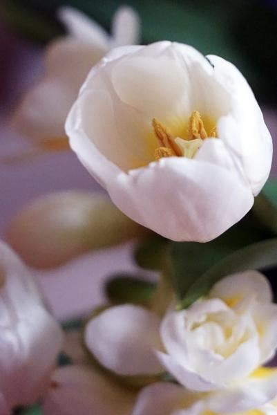 Tulips & Fresias by Silverzone