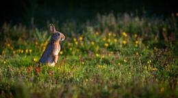 Wascally Rabbit