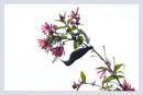 Mrs Goulds Sunbird Female by prabhusinha