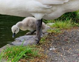 Mum you've got big Feet