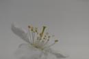white by maratsuikka
