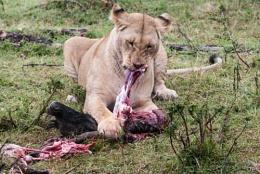 Eating the Kill