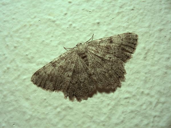 Moth by TonyDy