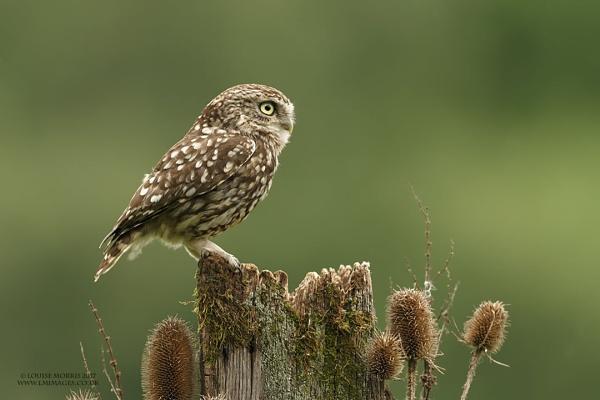 Mr Owl...... by Louise_Morris