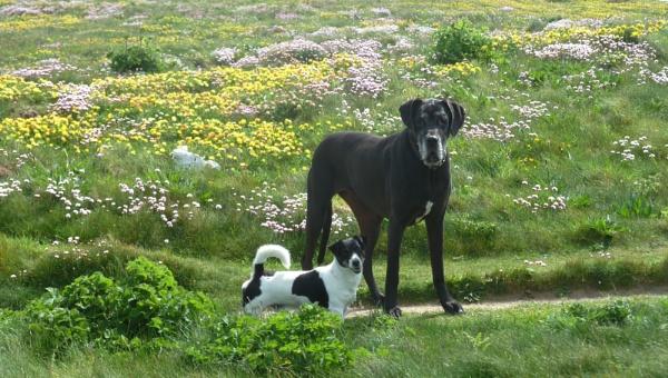 Balu and Nelson at Trevose by JuBarney
