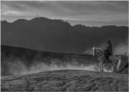 `#white horse