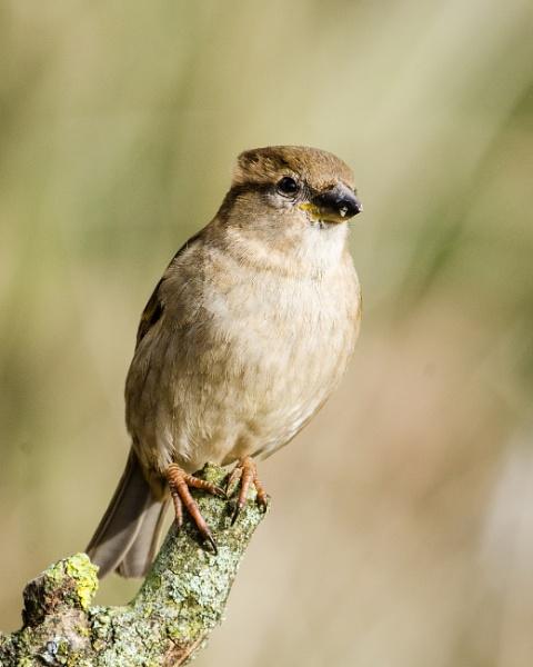 garden bird by Agglestone