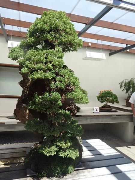 Bonsai 2 by artgaz1062