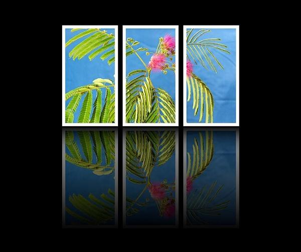 Triple Split by russellsnr