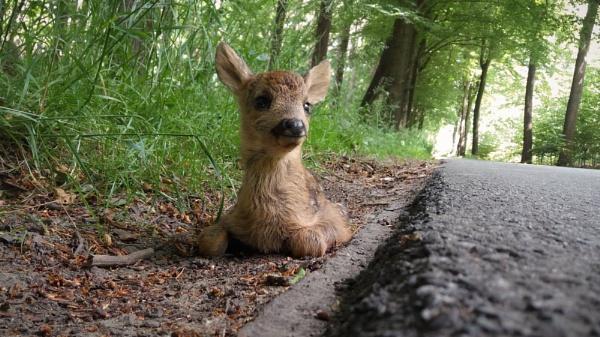 Dear Deer by Drummerdelight