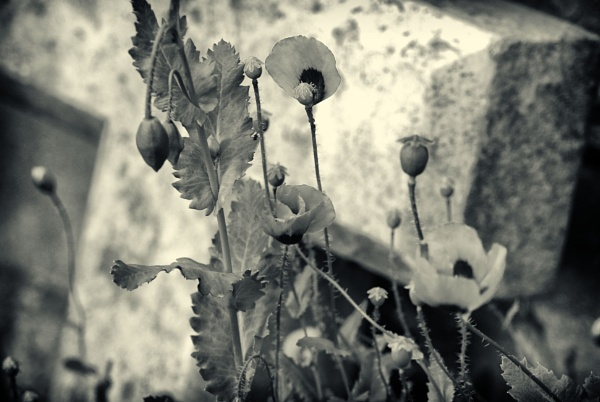 Life amongst the dead (mono) by KrazyKA