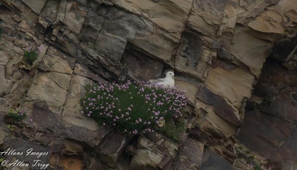 Flora nest by allan56
