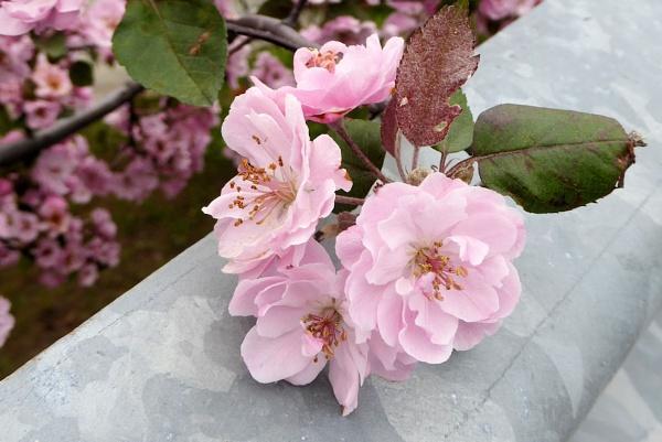 Spring Blooms by Joline