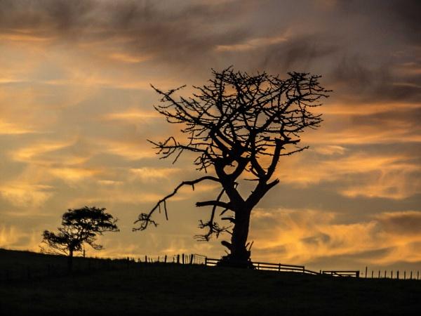 Dead Tree Dawn by chensuriashi