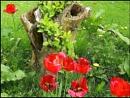 Wild Garden by mudge
