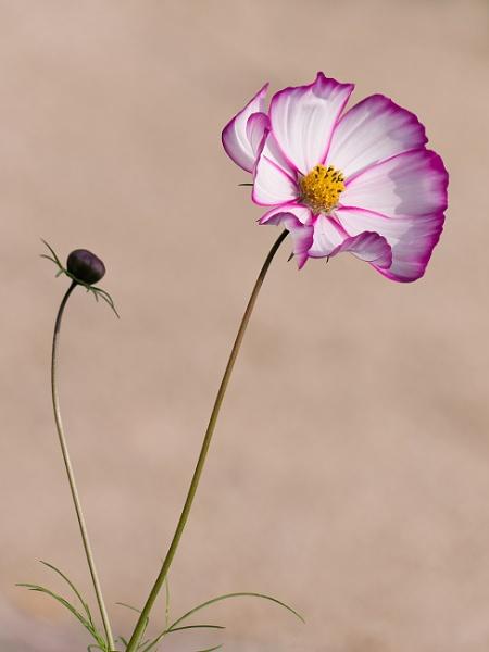 Flower in the park. by franken