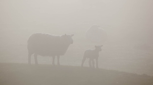 In the mist by john thompson